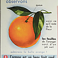 Collection ... affiche scolaire l'orange / le verre