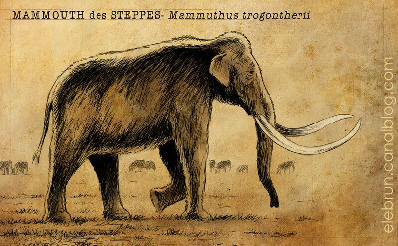 Mammouth steppes impression