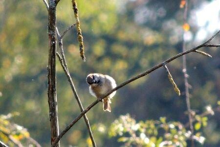 Petit oiseau 4