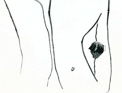 fleur_mourante