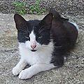 Calimera : une 4'pattes adoptée et heureuse.