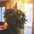 Le Ficus de Poésie - http://tartineetpoesie.neufblog.com