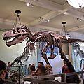 New york, deuxième journée, le musée d'histoire naturelle