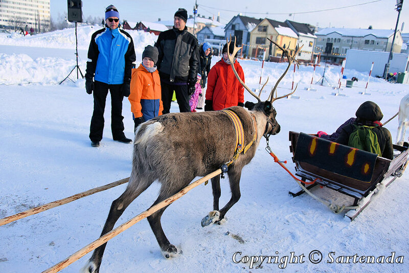 reindeer_rides_for_families_oulu_-5