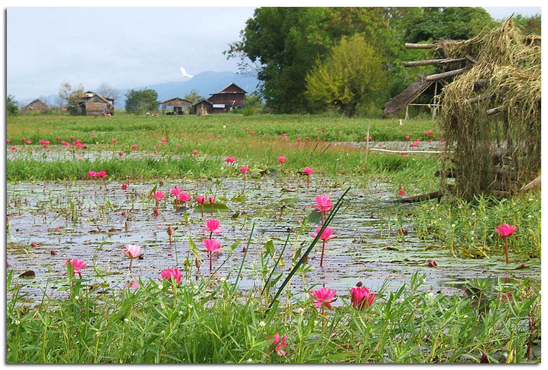 Myanmar_lac_Inle_0