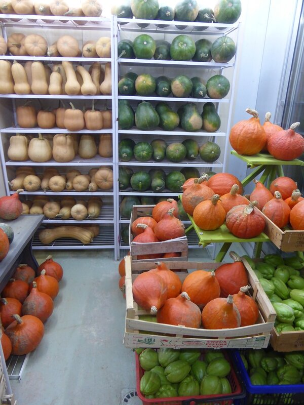 22-courges 2014 (1)