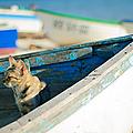 chat-bateau