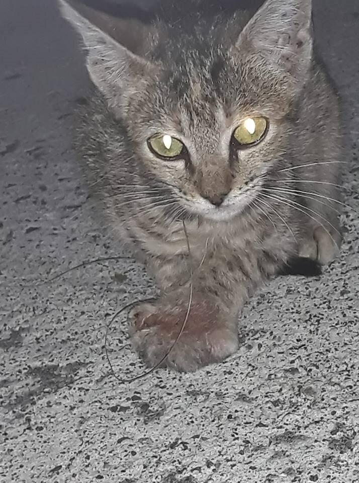 sa chatte à serré porno vidio donload