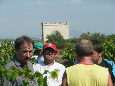 Vendanges_Maguelone_015