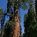 2018 07 10 - Sequoia National Park
