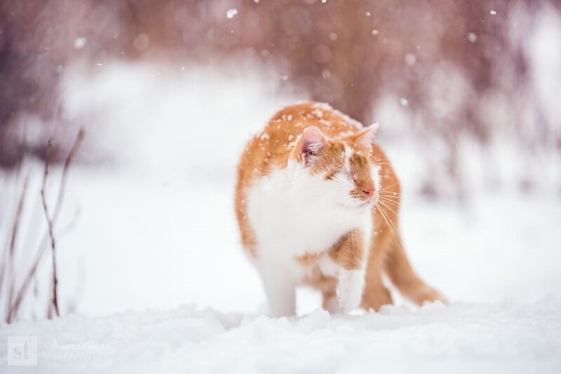 Meet-Kazou-the-eyeless-cat-who-apparently-can-see-5c3252973c614__880