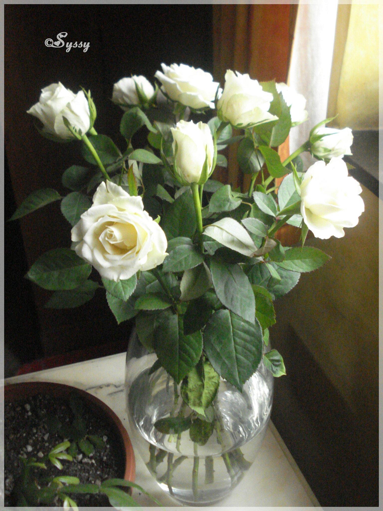 ♥ De jolies roses ♥