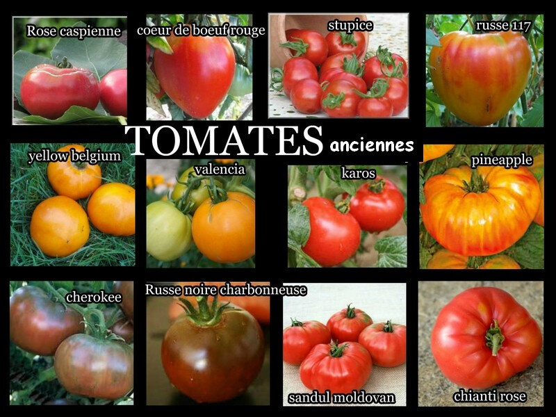tomates anciennes 2