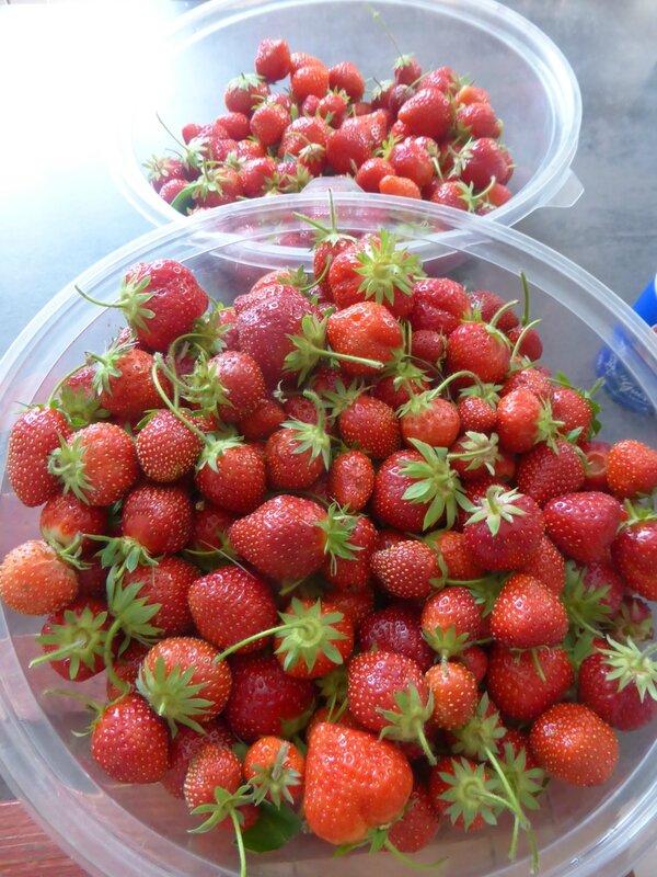21-fraises (2)