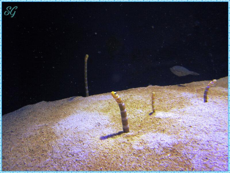 Océanopolis (26)