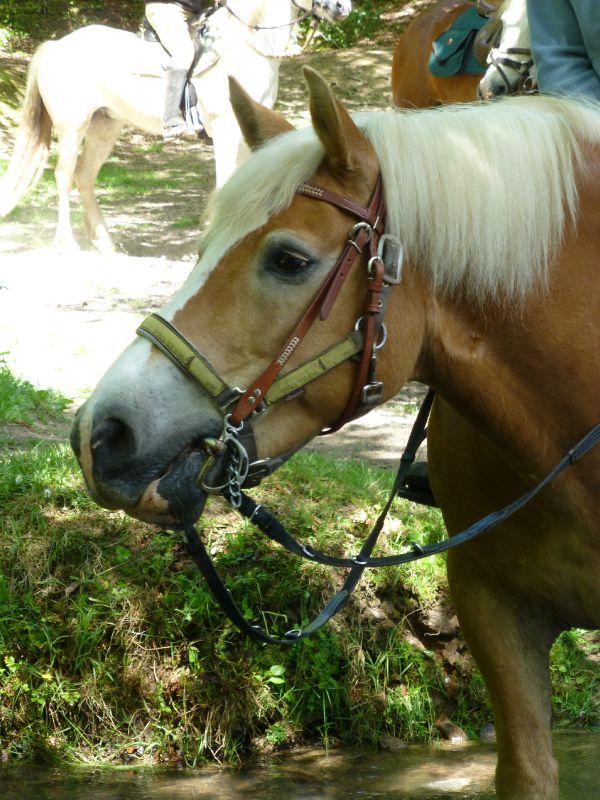 balade equestre gastronomique à La Lucerne d'Outremer (143)