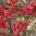 Printemps en fleurs