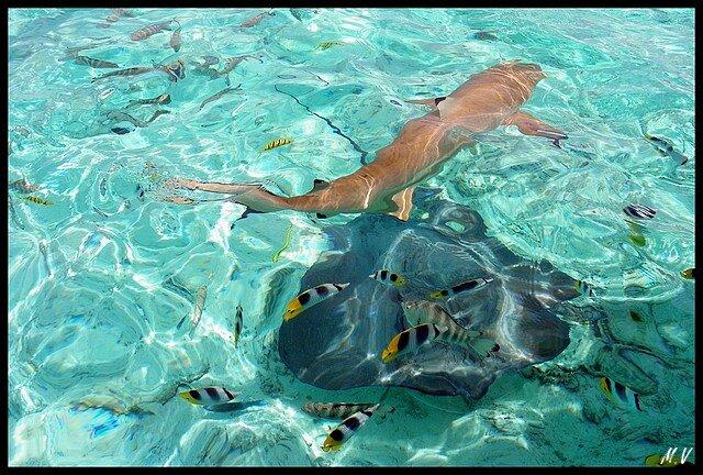 Aquatic diversity