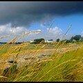 Herbes folles & nuage menaçant