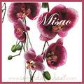 bouquet de mariée intemporel MISAO