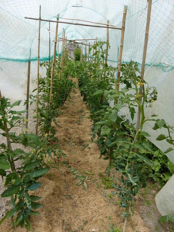 17-tomates jcq (3)