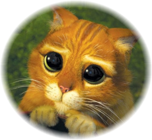 Chat_potte4-1-