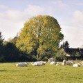 Frêne, St Martin du Vivier, octobre 2005