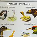 Collection ... affiche la vipere et le lezard / familles d'oiseaux