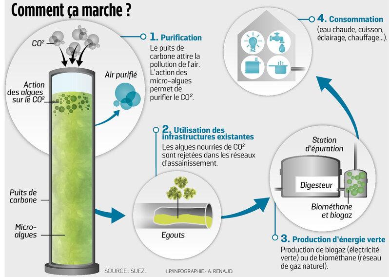 Puits_carbone