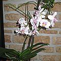 ORCHIDEE 52