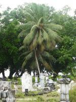 77_Vieux cimetière