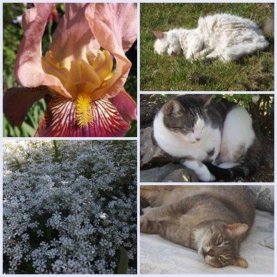 Cats & garden (6)
