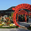 Rencontre d'automne autour des chrysanthèmes