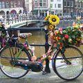 Des vélos partout !!