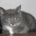 Joba : un 4'pattes adopté et heureux.