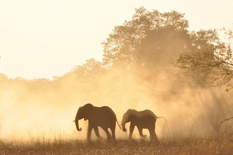 Eléphants, parc de Bwabwata, Namibie