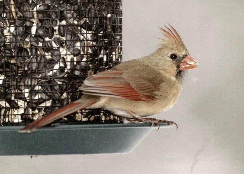 Oiseaux AD246