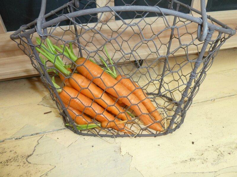 16-carottes 3 aout (11)