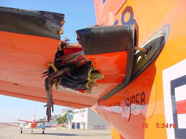 accidents_avions_impact_oiseaux_5