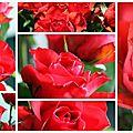Quand vous devenez pessimiste, regardez une rose.