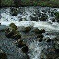 2008 04 23 Une rivère près du Chambon sur Lignon (15)