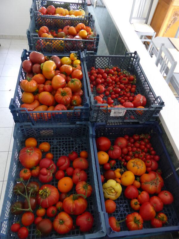 29-tomates (10)