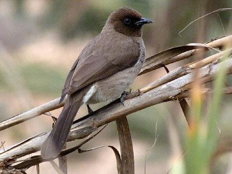 photo 5 l'oiseau sur la tige de roseau