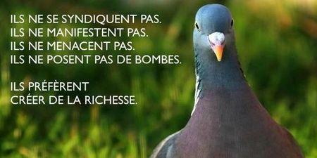 1768492_3_7694_les-pigeons-mouvement-de-defense-des_7ed9eb260ebfb90238e927a0b0af9883