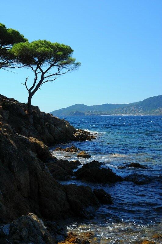 Pin parassol et bord de mer
