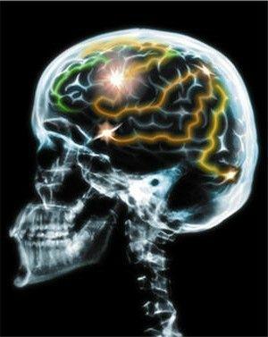 taille-cerveau-653824