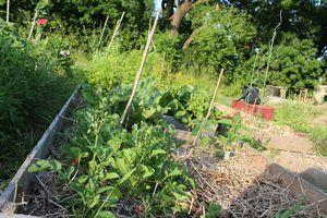jardinIMG_8286
