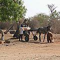 Sénégal (4)