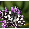 Carte_Melanargia_galatea_010811
