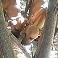 chiots mangrove 4